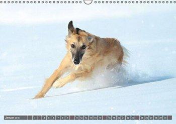 silken-windsprite-kalender-2016-goldenmerlo-merlin-calisto-ansicht-januar