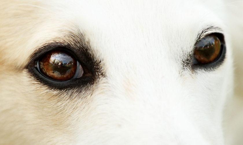 Die Augenfarben beim Silken Windsprite
