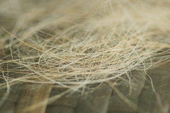 Silken-Windsprite-Unterwolle-IMG_9638