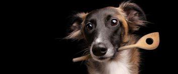 silken-windsprite-hund-ernaehrung-futter-02
