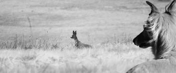 silkenwindsprite-jagd-jagdtrieb-wild-reh