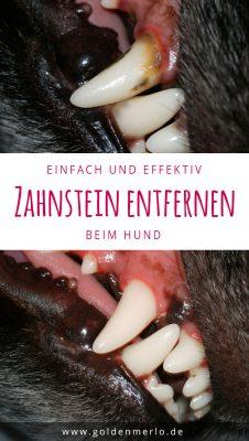 So kannst du einfach und effektiv bei deinem Hund Zahnstein entfernen. Zahnstein entfernen und vorbeugen kann man aber recht einfach um so die Zahngesundheit zu erhalten und dem Hund eine spätere Zahnsteinentfernung unter Narkose zu ersparen.