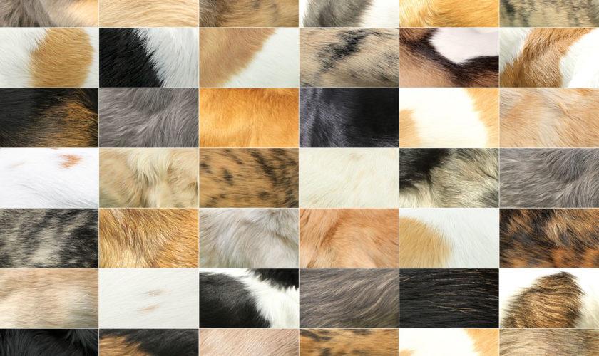Alle Fellfarben des Silken Windsprite in der Übersicht