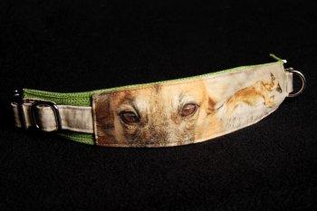 hunde-halsband-kk-dox-foto-halsband-druck-golden-merlo-04