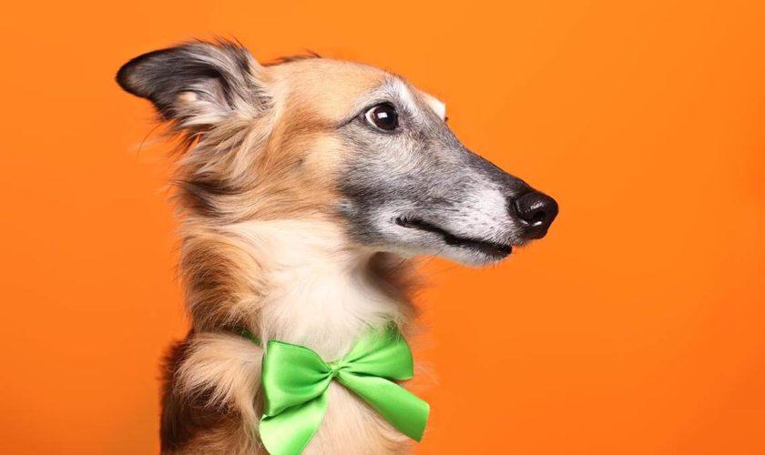 """Silvester-Angst beim Hund: Was wirklich hilft<span class=""""badge-status"""" style=""""background:#"""">[Werbung]</span>"""