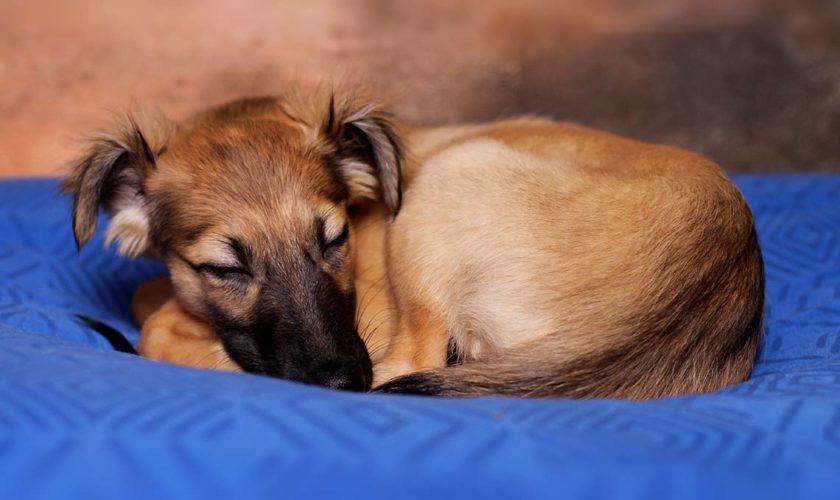 Hund alleine Zuhause – So klappt's ganz entspannt!