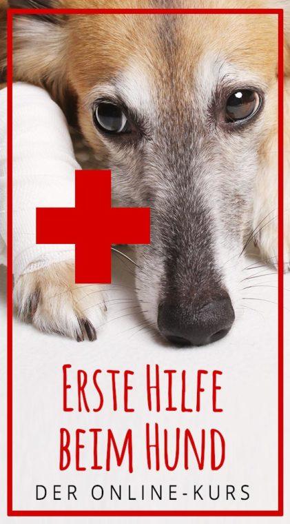 Erste Hilfe beim Hund: Der Online-Kurs