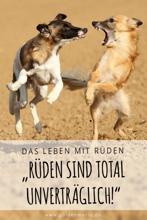 Spielverhalten bei Hunden: Spielformen und -typen. Kommunikation und Körpersprache