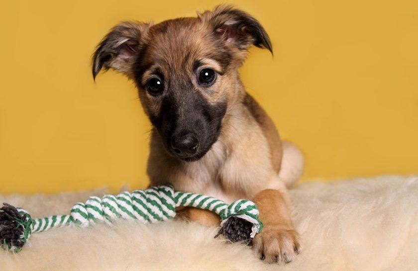 Geld sparen mit Hund – geht das überhaupt?