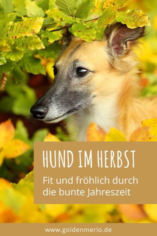 Fit Und Fröhlich Durch Die Bunte Jahreszeit Hund Im Herbst