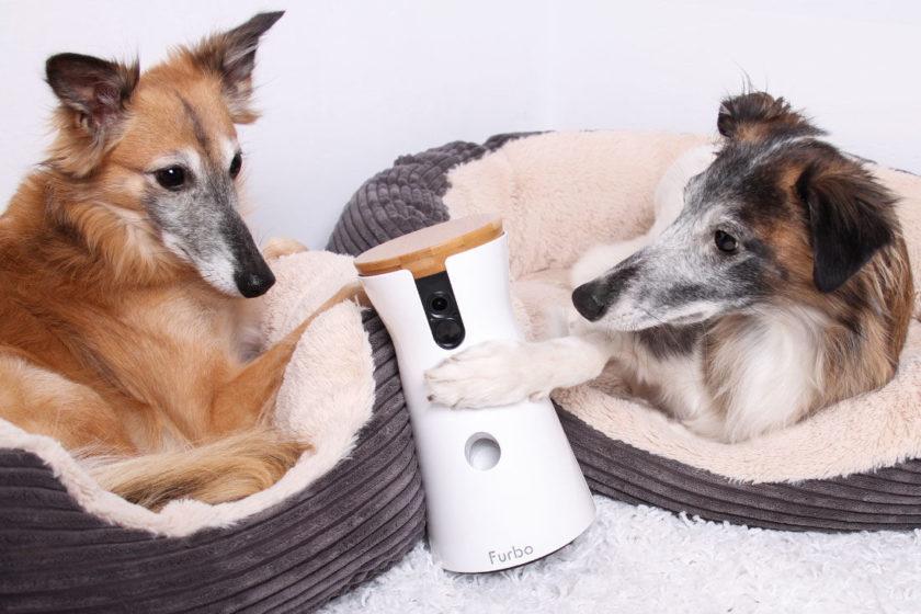"""[Anzeige] Hund entspannt alleine zuhause mit der Furbo Hundekamera<span class=""""badge-status"""" style=""""background:#"""">[Werbung]</span>"""