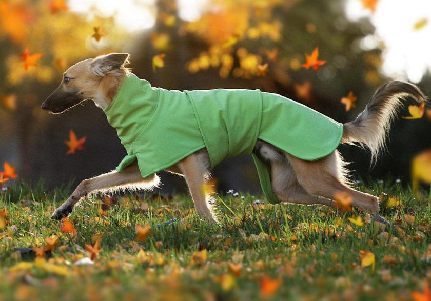 """[Anzeige] Ein maßgeschneiderter Hundemantel von WAXWERKE<span class=""""badge-status"""" style=""""background:#"""">[Werbung]</span>"""