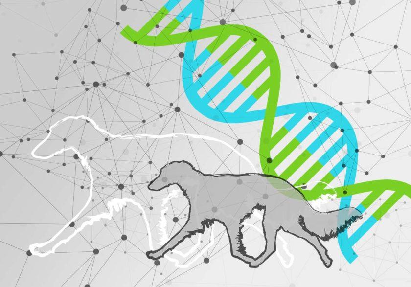 Eine Reise durch die DNA der Silken Windsprites [UPDATE]
