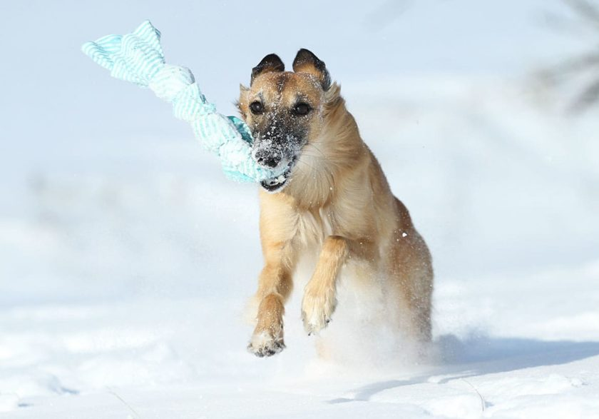 """Weihnachtsgeschenke für den Hund – 5 Last-Minute Ideen<span class=""""badge-status"""" style=""""background:#"""">[Werbung]</span>"""