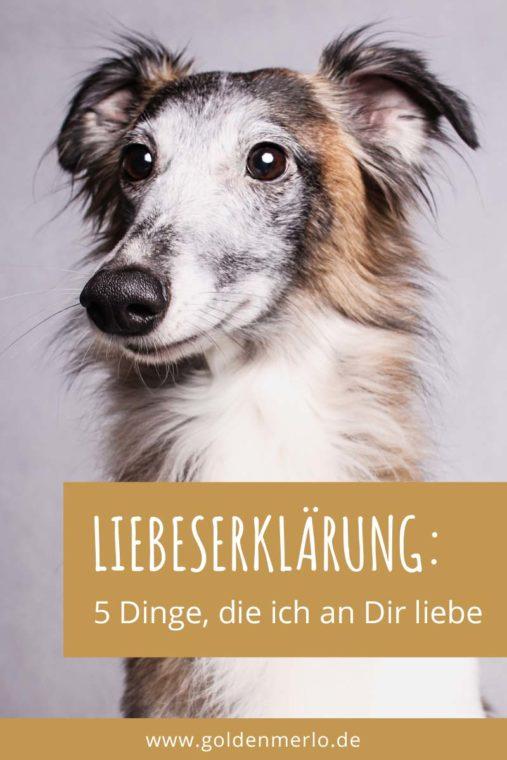 An Meinen Hund 5 Dinge Die Ich An Dir Liebe