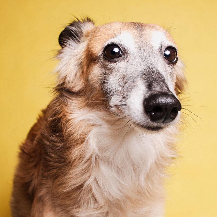 An meinen Hund: 5 Dinge, die ich an Dir liebe