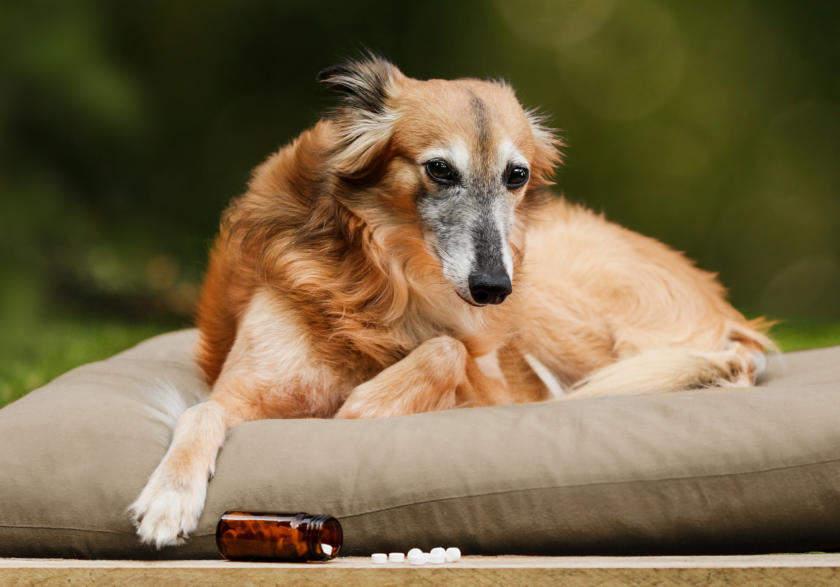 Gelenkerkrankungen beim Hund: Schüßler-Salze als natürliche Unterstützung