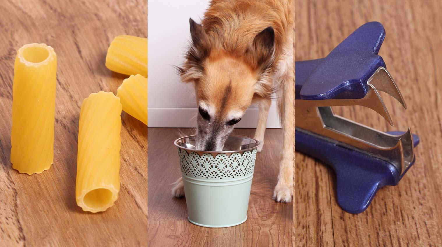 12 erstaunliche Lifehacks, Tipps und Tricks für Hundefreunde